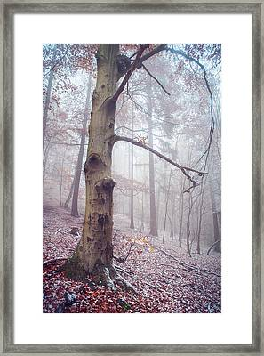 Memory Of The Trees. Winter Framed Print