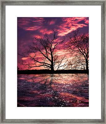 Memory Of Trees Framed Print by Bob Orsillo