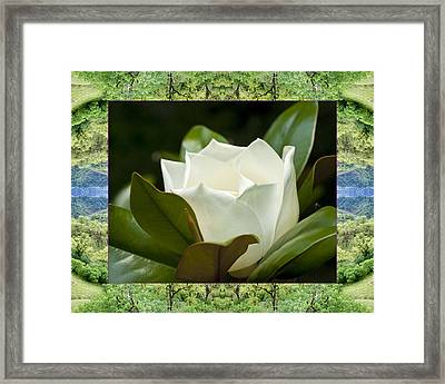 Framed Print featuring the photograph Mendocino Magnolia by Bell And Todd