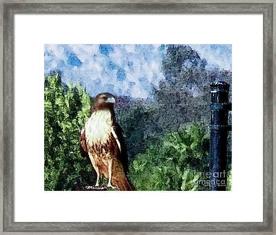 Menifee Falcon Framed Print