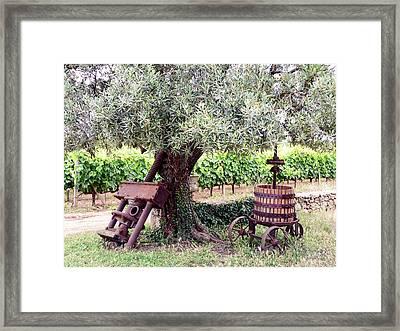 Mercouri Vineyard Framed Print