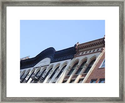 Merging Crowns Framed Print by Megan Canell  Downing