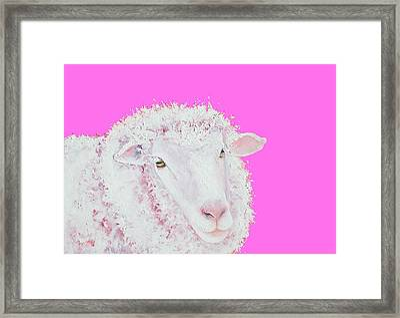 Merino Sheep On Hot Pink Framed Print by Jan Matson