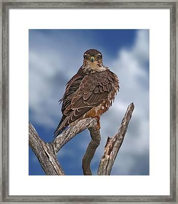 Merlin Framed Print by Michael Cummings