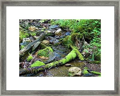 Mermaid Framed Print by Shannon Guest