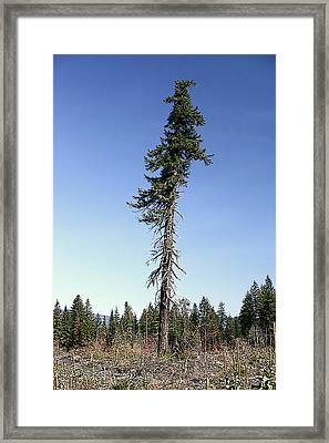 Merry Christmas Gifford Pinchot Framed Print by Larry Darnell