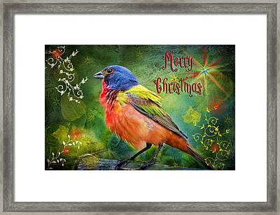 Merry Christmas Painted Bunting Framed Print