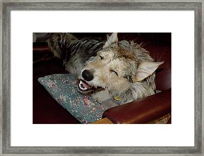Merry Mikey Framed Print by Ross Powell