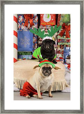 Merry Pug-mas Framed Print by Trish Tritz