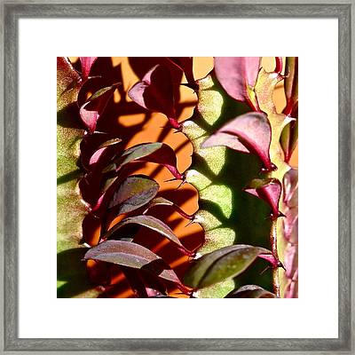 Meshed Framed Print by Bonnie See