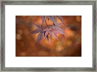 Framed Print featuring the photograph Mesmerize  by Viviana  Nadowski