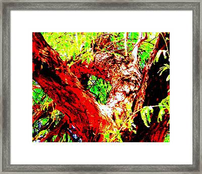 Mesquite  Framed Print by Lessandra Grimley