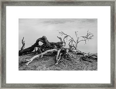 Mesquite Roots - Death Valley 2015 Framed Print