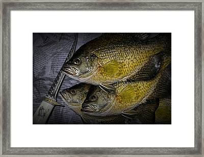 Mess Of Fish To Clean Framed Print by Randall Nyhof