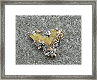 Message From Atlantis Framed Print by Pamela Patch