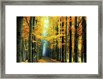 Messengers Of Light Framed Print by Janek Sedlar