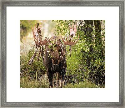 Framed Print featuring the photograph Messy Moose by Mary Hone