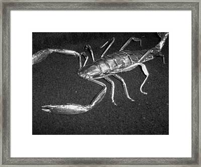 Metal Scorpion Framed Print by Jeff Orebaugh