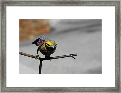 Framed Print featuring the photograph Metallic Bunting by Richard Patmore