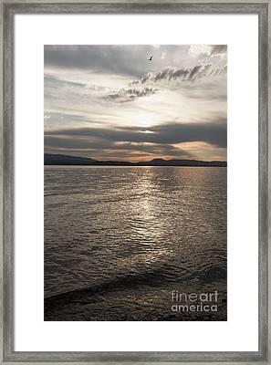 Metallic Evening Framed Print by Carolyn Brown