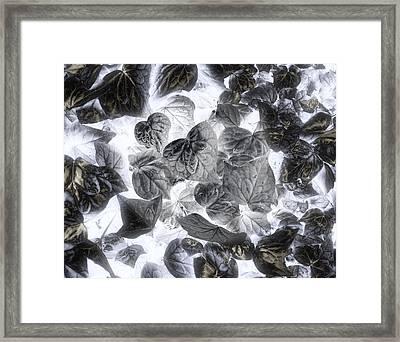 Metamorphosis Framed Print by Wayne Sherriff