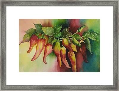 Mexican Adventure Framed Print