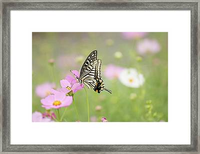 Mexican Aster With Butterfly Framed Print