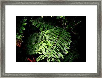 Mexican Bird Of Paradise Framed Print by Lessandra Grimley