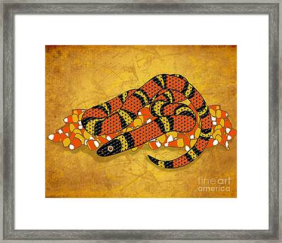 Mexican Candy Corn Snake Framed Print