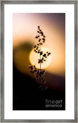 Mexican Desert Sunset Framed Print by Jorgo Photography - Wall Art Gallery