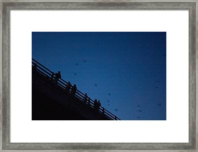 Mexican Free-tailed Bats Fly Framed Print by Joel Sartore