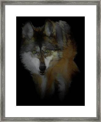 Mexican Grey Wolf Da2 Framed Print by Ernie Echols