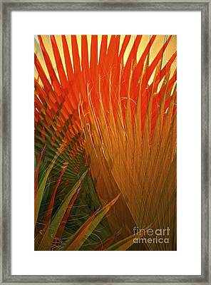 Mexican Palm Framed Print
