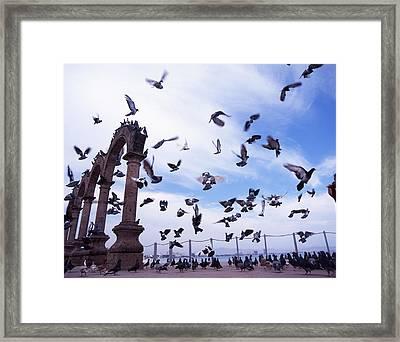 Mexican Pigeon Ruins Framed Print by Benjamin Garvey