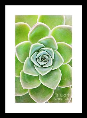 Desert Flora Photographs Framed Prints