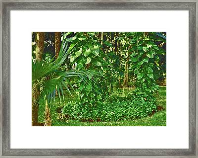 Framed Print featuring the photograph Mexico Greenery by Tammy Sutherland