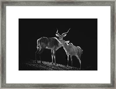 Mi Amor Framed Print