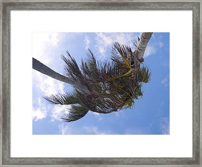 Miami Palms Framed Print by JAMART Photography