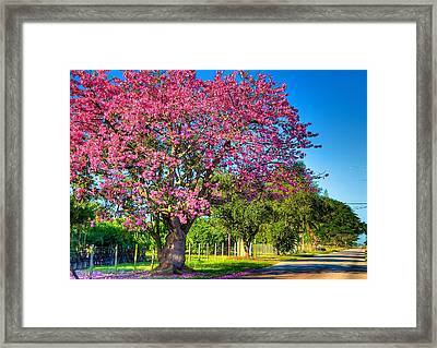 Miami's Fall Colors Framed Print