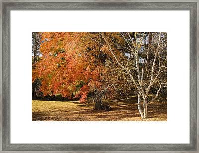 Michigan Autumn 1 Framed Print