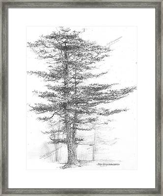 Michigan-eastern White Pine Framed Print