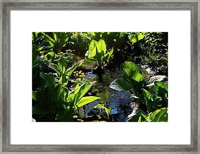 Michigan Marsh - 1 Framed Print by Scott Hovind