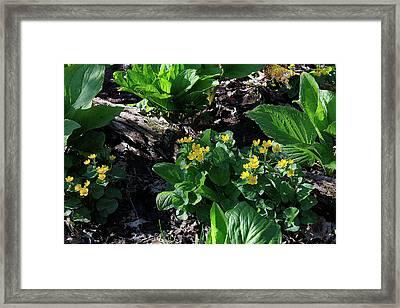 Michigan Marsh - 2 Framed Print by Scott Hovind