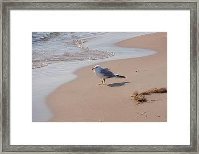 Framed Print featuring the photograph Michigan Seagull  by Beth Akerman