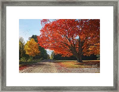Michigan Spellbound Framed Print by Kathi Mirto