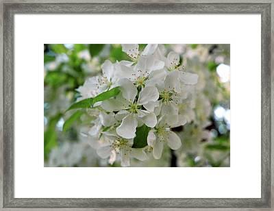 Framed Print featuring the photograph Michigan State Flower by LeeAnn McLaneGoetz McLaneGoetzStudioLLCcom