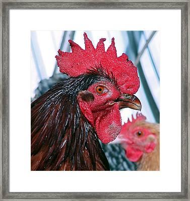Mick Framed Print