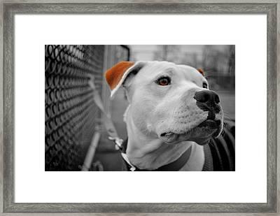 Mickey Brown Eyes Framed Print