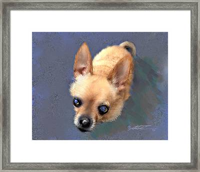 Mickey The Rescue Dog Framed Print