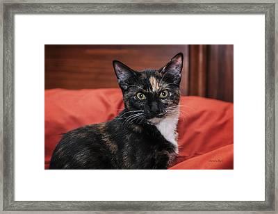Micki Moo Framed Print by Karen Slagle